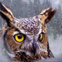 Winter Owl Fine Art Print