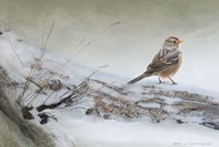 Snowscape Wc Sparrow Fine Art Print