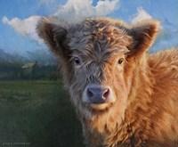 Highland Calf Fine Art Print
