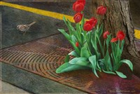 Sparrow,Tulips And Sidewalk Fine Art Print