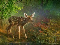 Forest Fawn Fine Art Print