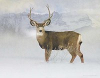 Bucky Deer Snow Fine Art Print