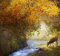 Deer By Woodland Brook Fine Art Print