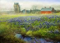 Blue Bonnet Barn Fine Art Print