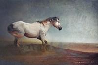 White Horse Dust Storm Fine Art Print