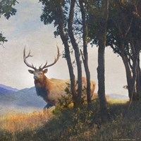 Mountain Elk Fine Art Print