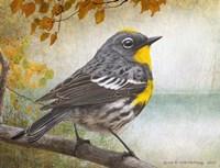 Wetland Warbler Fine Art Print
