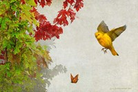 Butterfly And Warbler Fine Art Print