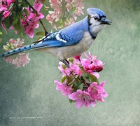 Bluejay Amid Blooms Fine Art Print