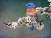 Apple Blossoms Bluebird Fine Art Print