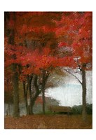 Maple Tree Walk Fine Art Print