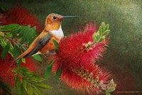 Red Bloom Hummingbird Fine Art Print