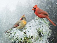 Snow Cardinals Fine Art Print