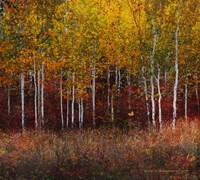 Aspen Forest Near Kelly WY Fine Art Print