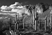 Superstition Mtn Saguaros Arizona Fine Art Print