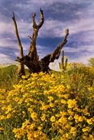 Desert Flowers With Tree Arizona Fine Art Print