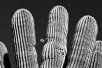 Saguaro Cactus Arizona Superstition Mtns Fine Art Print