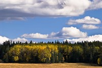 Escudilla Mountain Meadow Fall 2 Fine Art Print