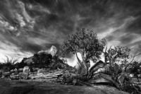 Sedona Juniper Tree 2 Fine Art Print