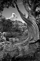Sedona Juniper Tree National Forest Fine Art Print