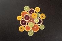 Citrus Drama II Fine Art Print