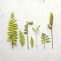 Flat Lay Ferns III Fine Art Print
