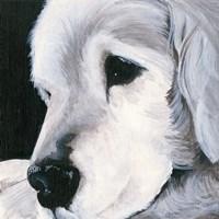 Max II Fine Art Print
