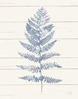 Fern Print II Blue Crop Fine Art Print