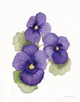 Easter Blessing Flower IX Fine Art Print