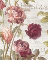French Roses II Fine Art Print