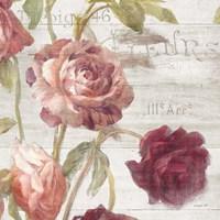 French Roses IV Fine Art Print