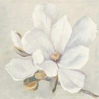 Serene Magnolia Fine Art Print