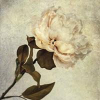 Lush Vintage Florals II Fine Art Print