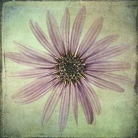 Lush Vintage Florals VIII Fine Art Print