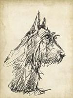Breed Studies I Fine Art Print