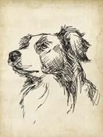 Breed Studies IX Fine Art Print