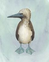 Watercolor Beach Bird I Framed Print