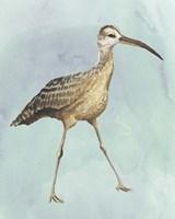 Watercolor Beach Bird II Framed Print