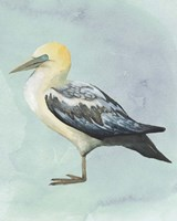 Watercolor Beach Bird III Framed Print