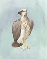 Watercolor Beach Bird IV Framed Print