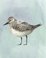 Watercolor Beach Bird V Framed Print