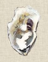 Oyster Shell Study I Fine Art Print