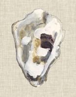 Oyster Shell Study II Fine Art Print