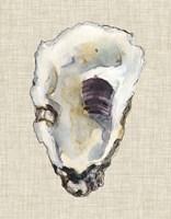 Oyster Shell Study III Fine Art Print