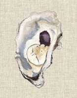 Oyster Shell Study IV Fine Art Print