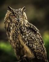 Wise Owl 2 Fine Art Print