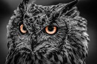 Wise Owl 5 Black & White Fine Art Print