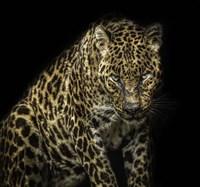 Angry Jaguar Fine Art Print
