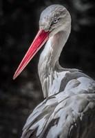 The Stork 7 Fine Art Print