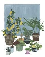 A Portrait of Plants II Framed Print